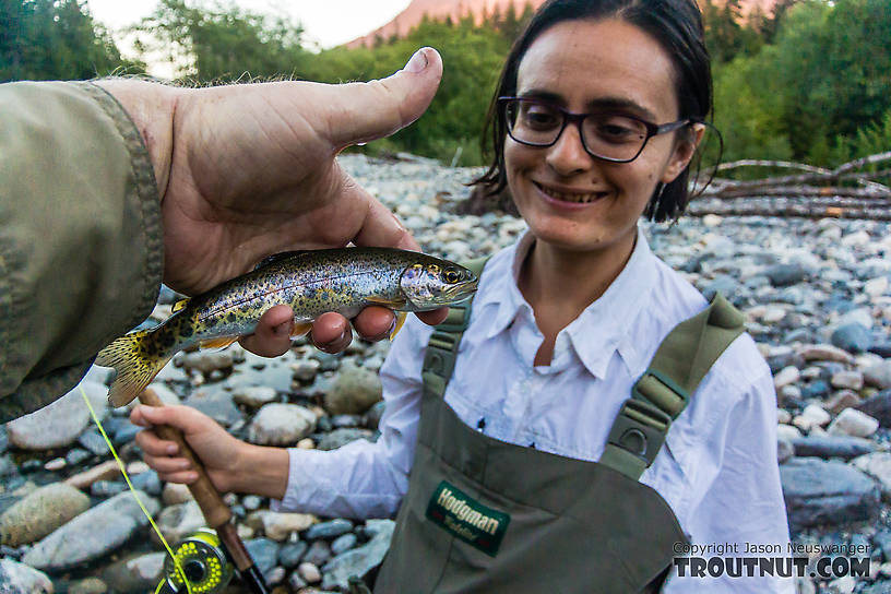 Lena's first coastal cutthroat From the South Fork Snoqualmie River in Washington.
