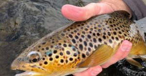 Euro Nymphing on the Provo River - Fly Fish Food -