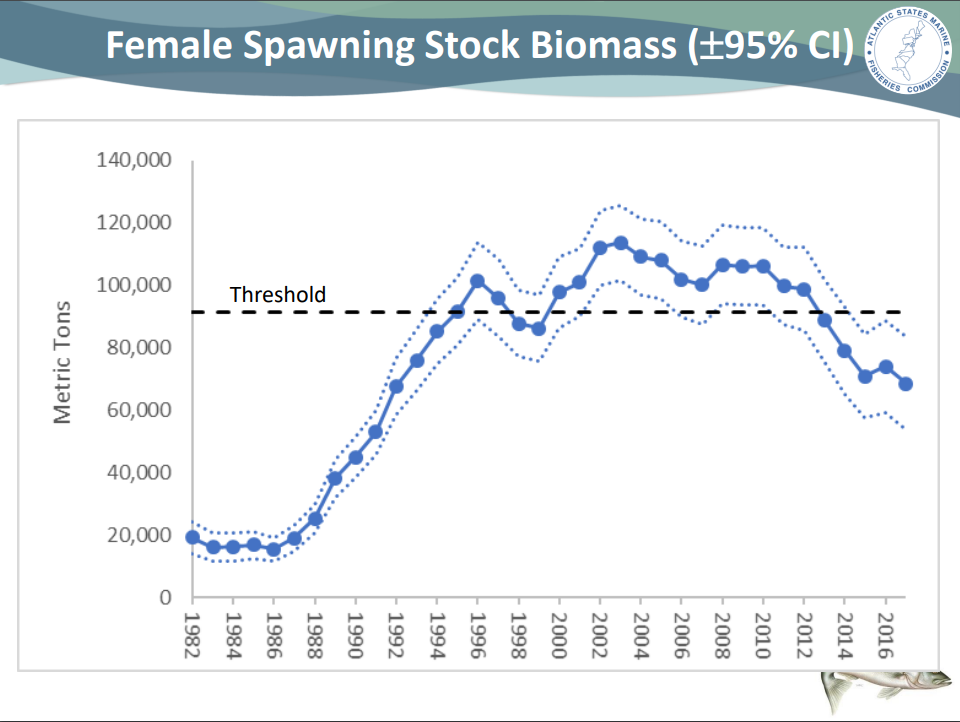 Striped Bass Stock Overview - On The Water