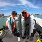 Catch and Cook Spring Salmon How To