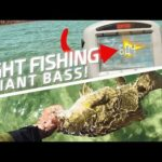 Sight Fishing Giant Bass in Crystal Clear Water